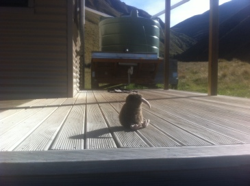 Steve chilling on the deck.