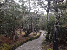 Track to Mt Arthur Hut.